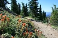 Elk Trail Wildflowers