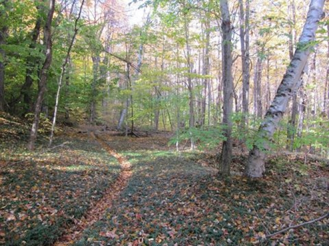Periwinkle Trail is among 15 miles of recently sanctioned trail in Dubuque State Forest.