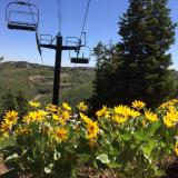 Park City Mountain Resort Bike Park Opens for the 2014 Summer Season